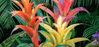 Tropical Jungle - NEU Sommer 2018